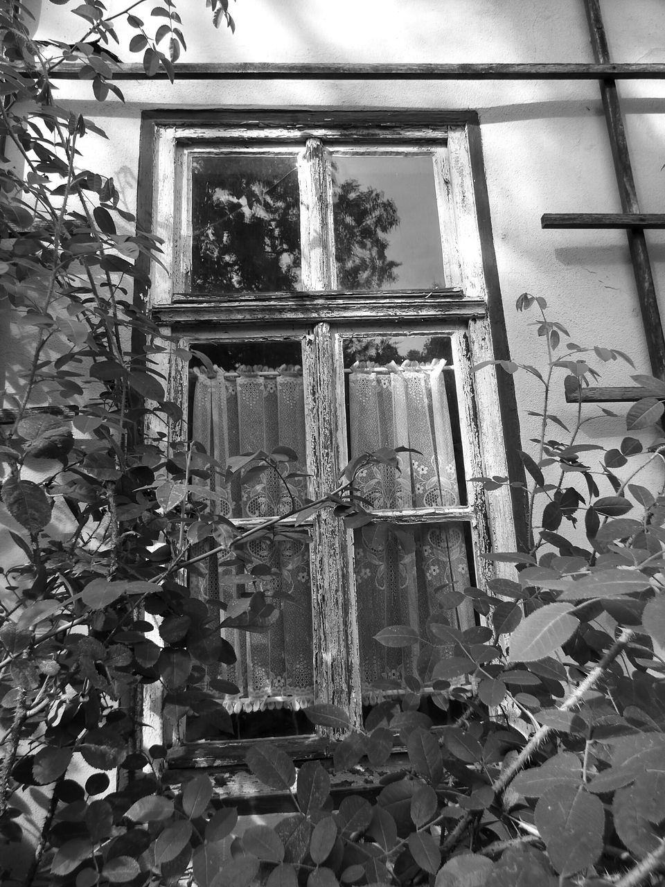 plant, window, growth, no people, architecture, day, outdoors, close-up