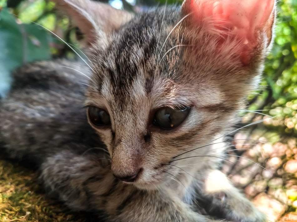 Animal Cute Mammal Close-up Pets Outdoors Day
