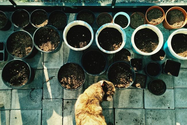 RePicture Growth Pet Growth New Growth Seeds Planting Greenhouse In The Greenhouse Plants 🌱 Cat Spring Time Plants Plant Plant Life Planting Seeds Greenhouses Ecology Organic Organicgardening Organics Growth Process New StartSpring Spring Flowers Springtime
