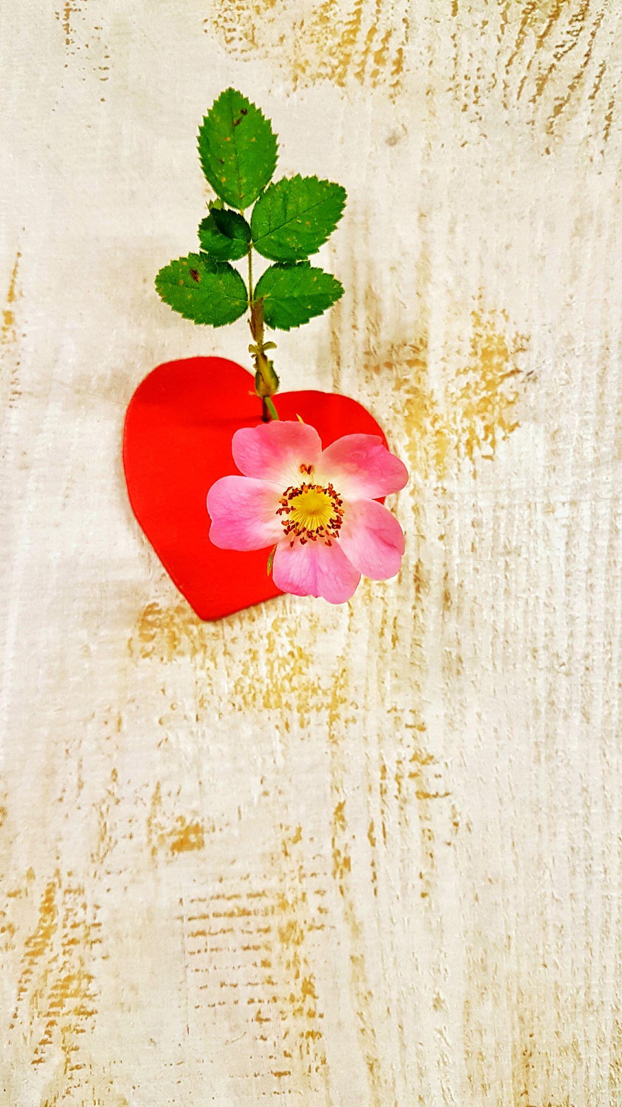 Herz Holztextur Holz Herzformieg Dekoidee Samsung Galaxy S7 EyeEm Gallery Rose🌹 Heart ❤ Deko Für Garten Heart