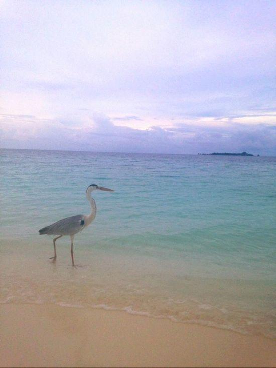 Taking Photos Islandlife Animals Birds Enjoying Life Vacation I Love Sea  That Wonderful Feeling Sea And Sky Relaxing