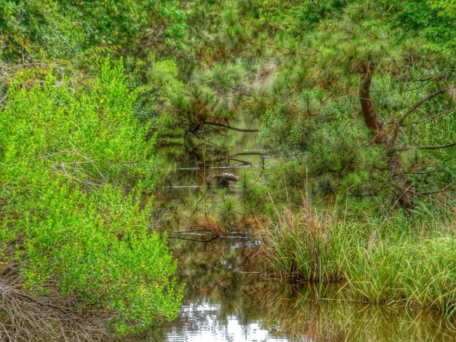 Green, green, green! Water Reflections Tree Nature Landscape