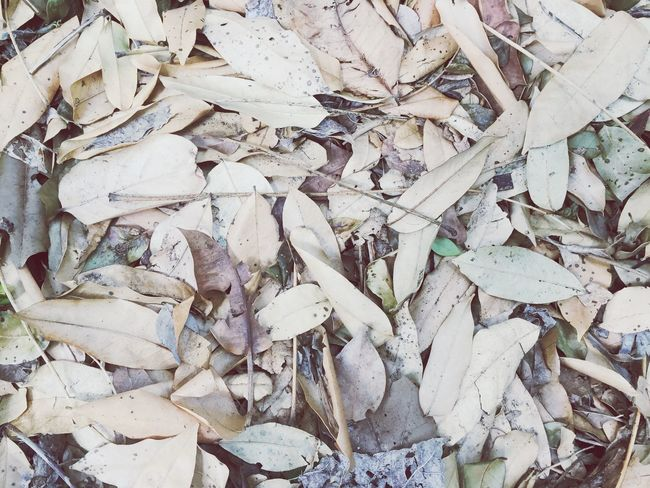 Leaf Dry Dead Winter Leaves Ground Full Frame Nature Brown Beige Sandy Colours Outdoors Life