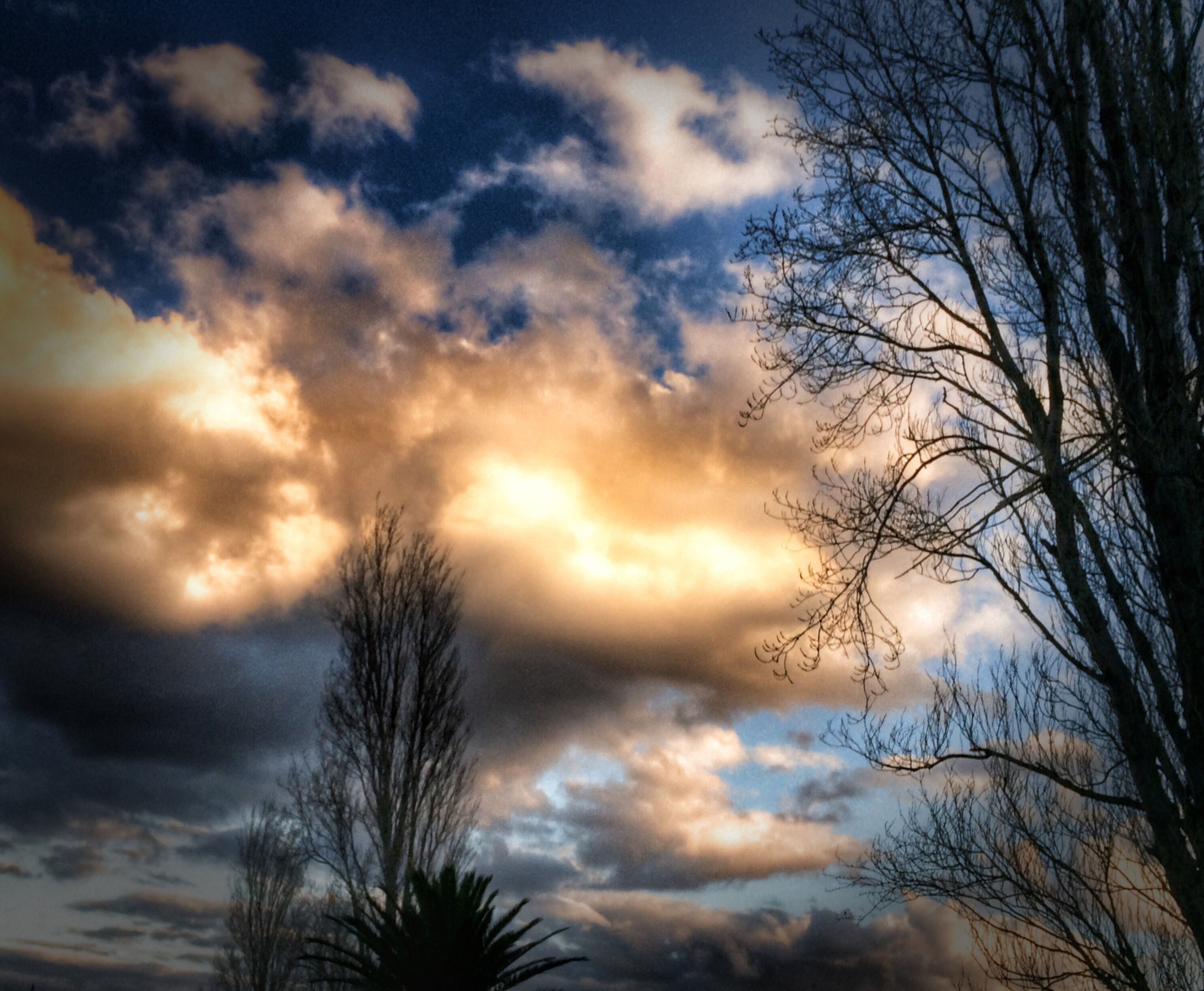 sunset, silhouette, sky, tranquility, beauty in nature, scenics, bare tree, cloud - sky, tranquil scene, low angle view, tree, nature, dramatic sky, cloud, cloudy, idyllic, branch, orange color, sun, moody sky