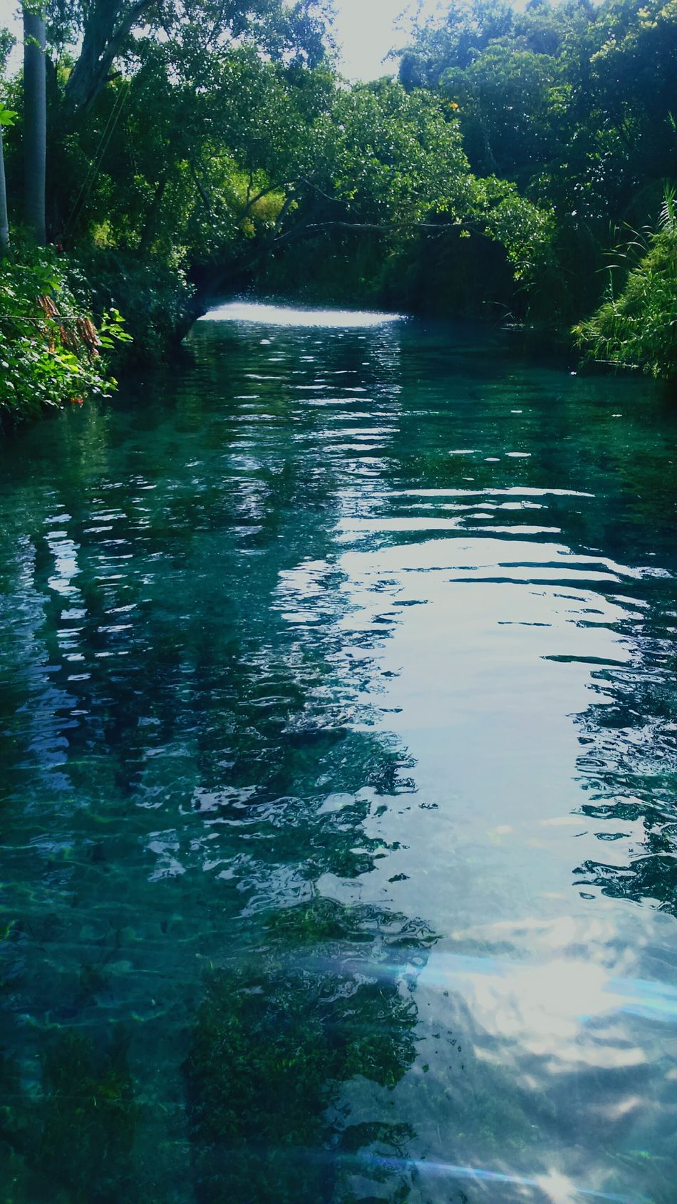Las Estacas Morelos 🏊🌎 Water Tree Nature Outdoors Beauty In Nature River