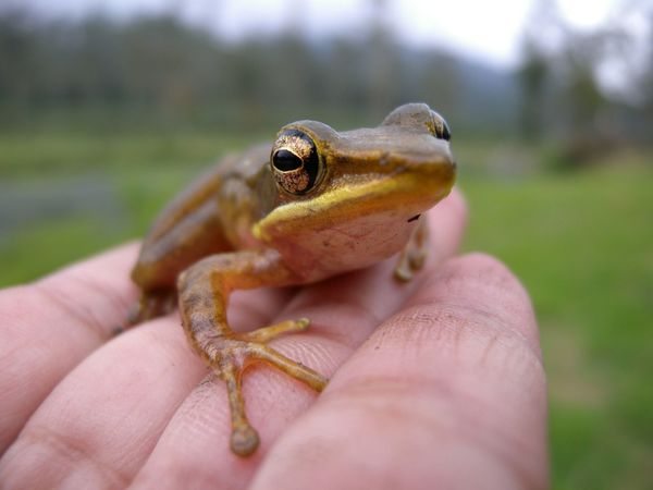 Frog in hand Frog Little Frog Animal Nature Macro Photography Macro Nature