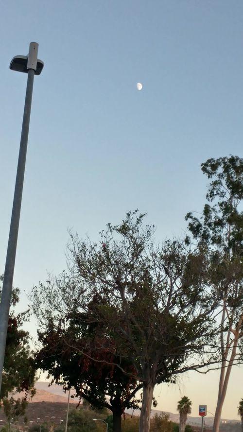 Moon Light Through Trees