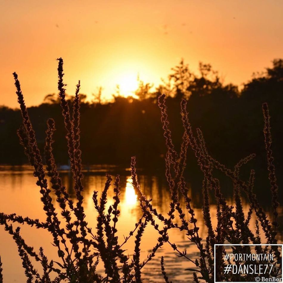 Sunset Plant Scenics Sun Beauty In Nature Close-up Tranquil Scene Idyllic Majestic Nature Growth Focus On Foreground Silhouette Tranquility Awe Lake Calm Water Orange Color Outline Seine-et-Marne Seine Et Marne Dansle77