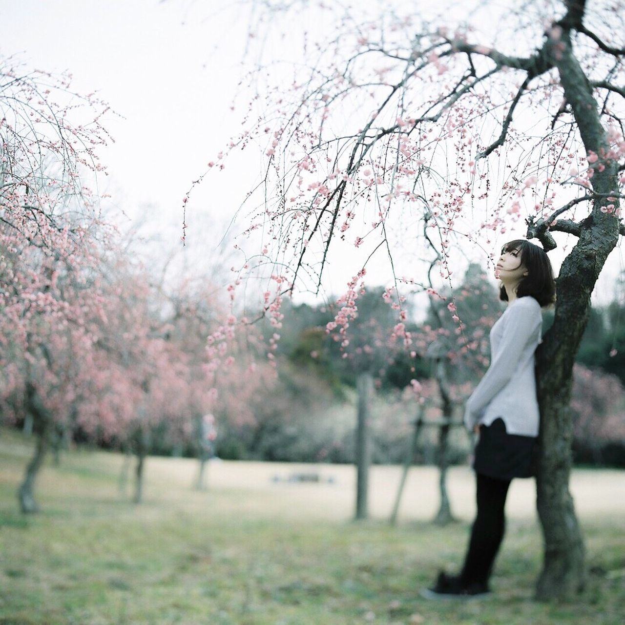 Tree One Person Flower Full Length Nature Pink Color Outdoors Cherry Blossom Branch Day Sky Beauty In Nature People Young Adult