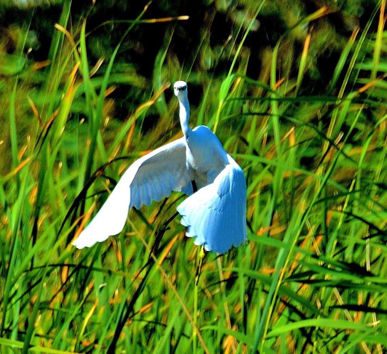 nature, animal themes, beauty in nature, animals in the wild, grass, one animal, growth, bird, green color, plant, field, no people, day, animal wildlife, outdoors, flower, close-up, perching