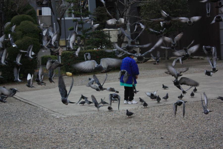 Japan 17 Day trip Osaka.Kyoto.Nara.Universal.Iga-ueno.なばなの里.Nagoya.Inuyama.サツキとメイの家 Bird Cityscapes Nagoya Osu Kannon Temple Osu Shopping Arcade Outdoors Pigeons