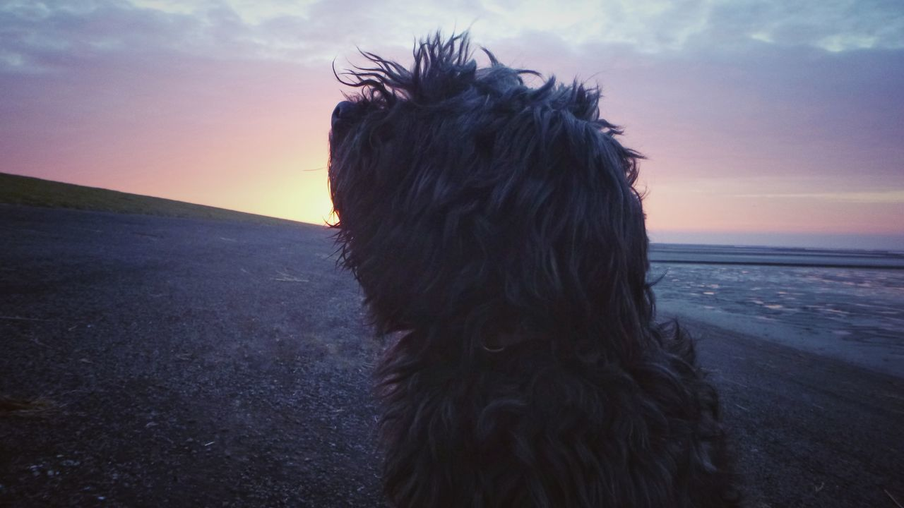 Beauty In Nature Sunset Sky No People Landscape Nature Outdoors Day Dog Photography Happiness Dogs Of EyeEm My Best Friend❤ Groningen Holland Seascape Photography EyeEm Nature Lover Domestic Animals Dog❤ Sunlight Animal Themes Dogs Dogoftheday Dog Love