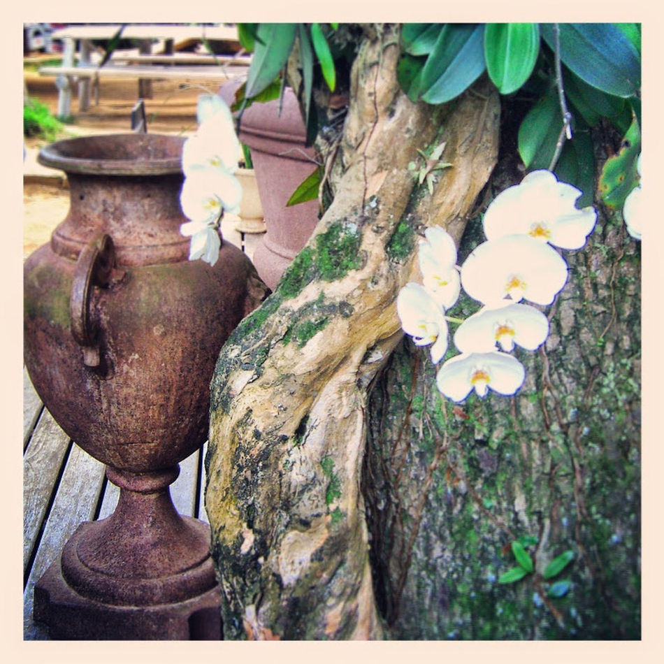an amazing and wonderful vacation in brazil ilhabela Brazil Ilhabela Amphora Jug Orchids Tree Brasilien Amphore Orchideen Baum Krug Flower Blumen