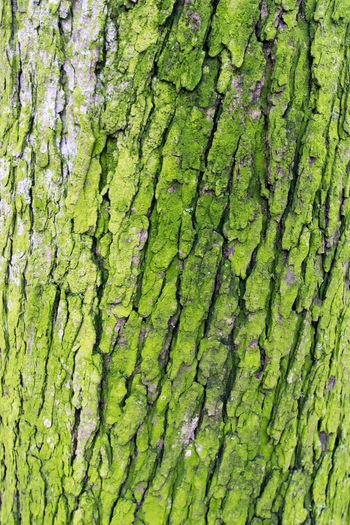 Backgrounds Close-up Day Forest Forest Photography Full Frame Green Color Growth Marbella Moss Nature Nature Photography No People Outdoors Pattern Plant Close Up Textured  Tree Tree Bark Tree Bark Texture Tree Closeup Tree Trunk Tree Trunk Trees Wilderness Detail Neon Life