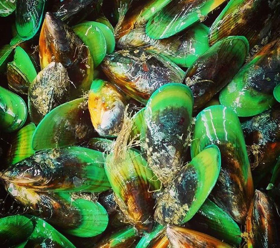 Mussels Seafood Kaimoana Kuku Green SHELLFISH  Kakariki 9Vaga_ColorGreen9 Aotearoa NZ Newzealand Ss_green_04