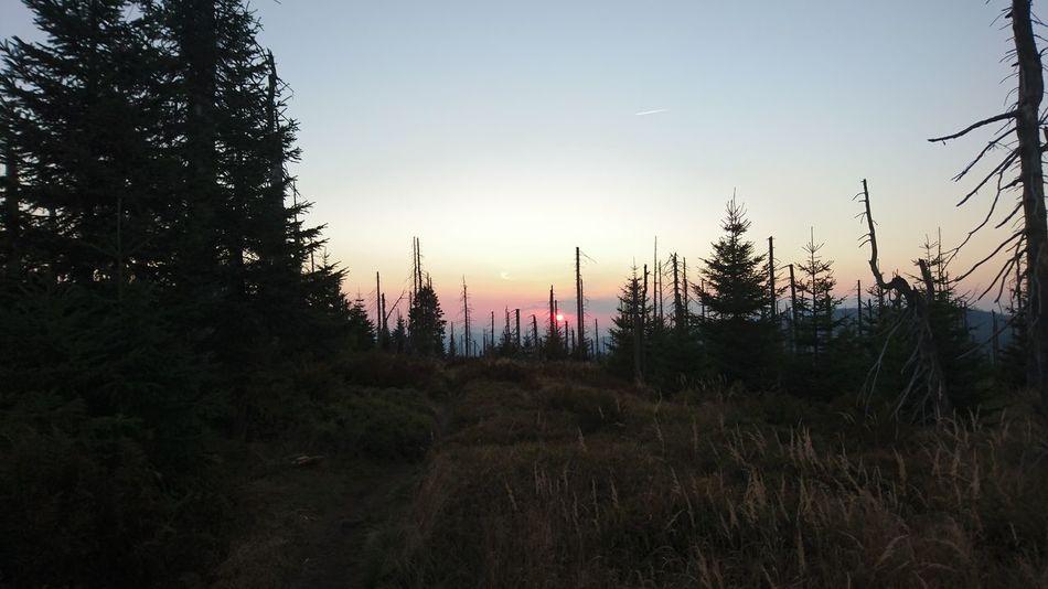 Lusen  Wald Sonnenuntergang Sunset Beauty In Nature First Eyeem Photo
