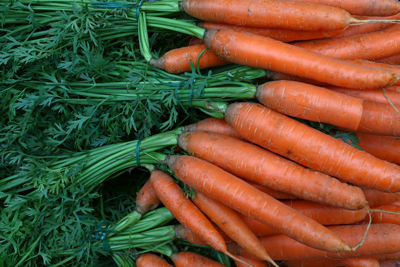 Fresh carrot bunches with green top on retail market stall Agriculture Backgrounds Carrot Day Food For Sale Freshness Green Green Color Harvest Healthy Eating Large Group Of Objects Market Market Stall Orange Color Organic Retail  Retail Display Root Vegetable Season  Shop Store The Shop Around The Corner Top Vegetable