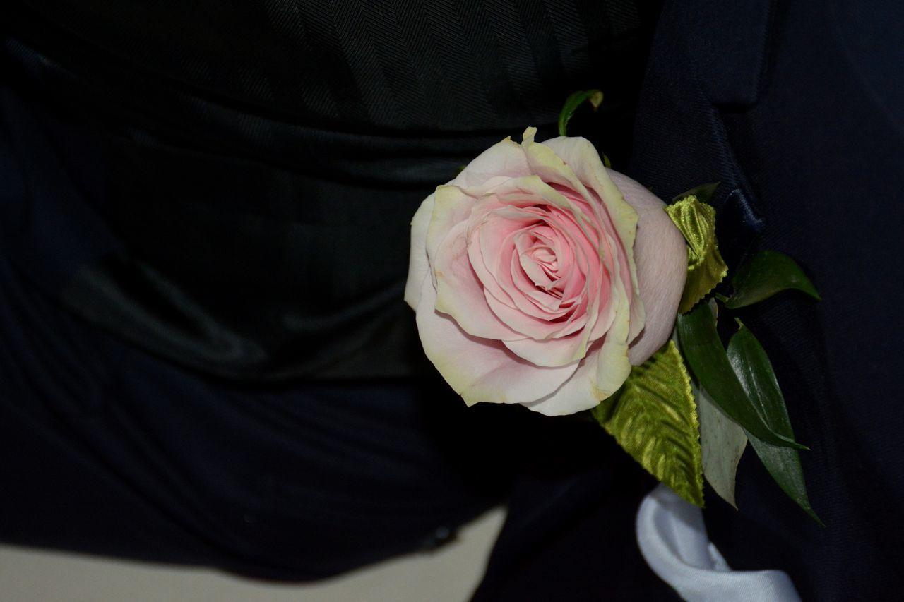 pink rose boutonniere Flower Rose - Flower Wedding Pink Pink Color Full Frame Boutonniere Boutonniere Flower Wedding Detail Groomsman Groomsmen Black Background Flower Head Petal Fragility Pink Rose Close-up Best Man Bestman Wedding Flowers Wedding Flower