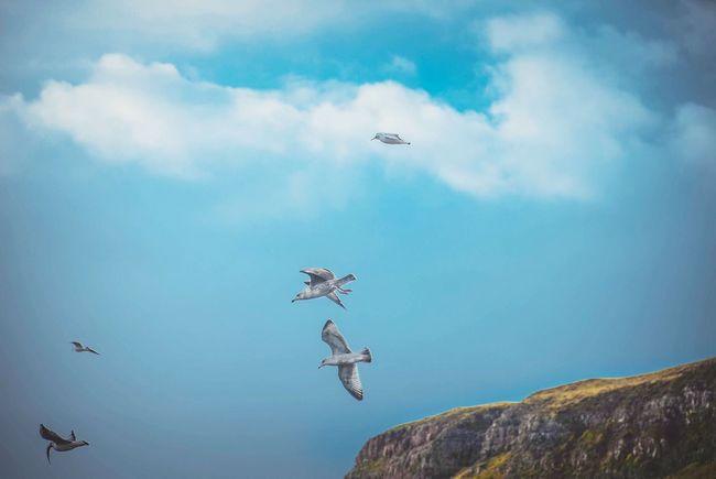 U.K. Scotland Isle Of Skye Uig Nature Landscape Landscapes
