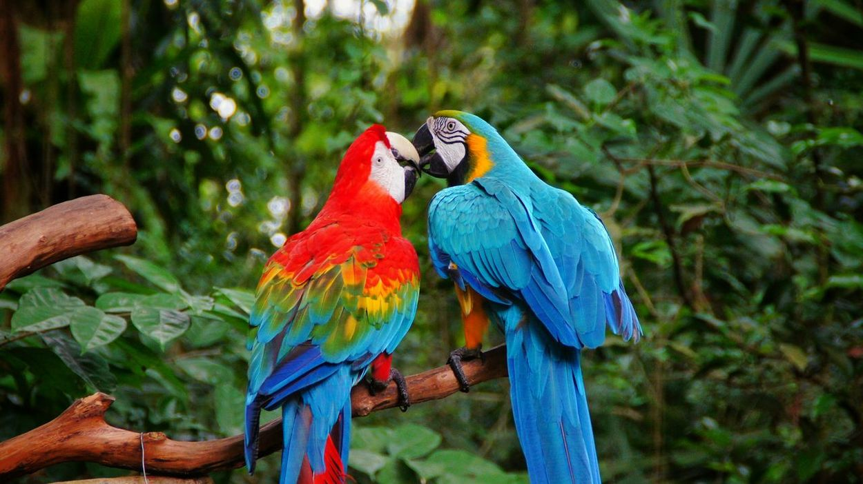 Parrot Bird Colourful Birds Birds Of Paradise Love Animals