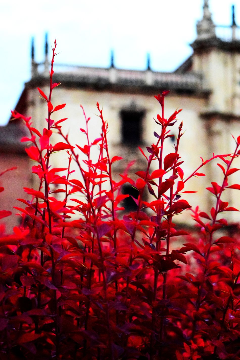 😊🌹🌷🌻Hanging Out Check This Out Taking Photos That's Me Hello World Cheese! Enjoying Life Relaxing Alcalá De Henares. (Madrid) Madrid Spain University Hi! Cervantes Colors Red Tree