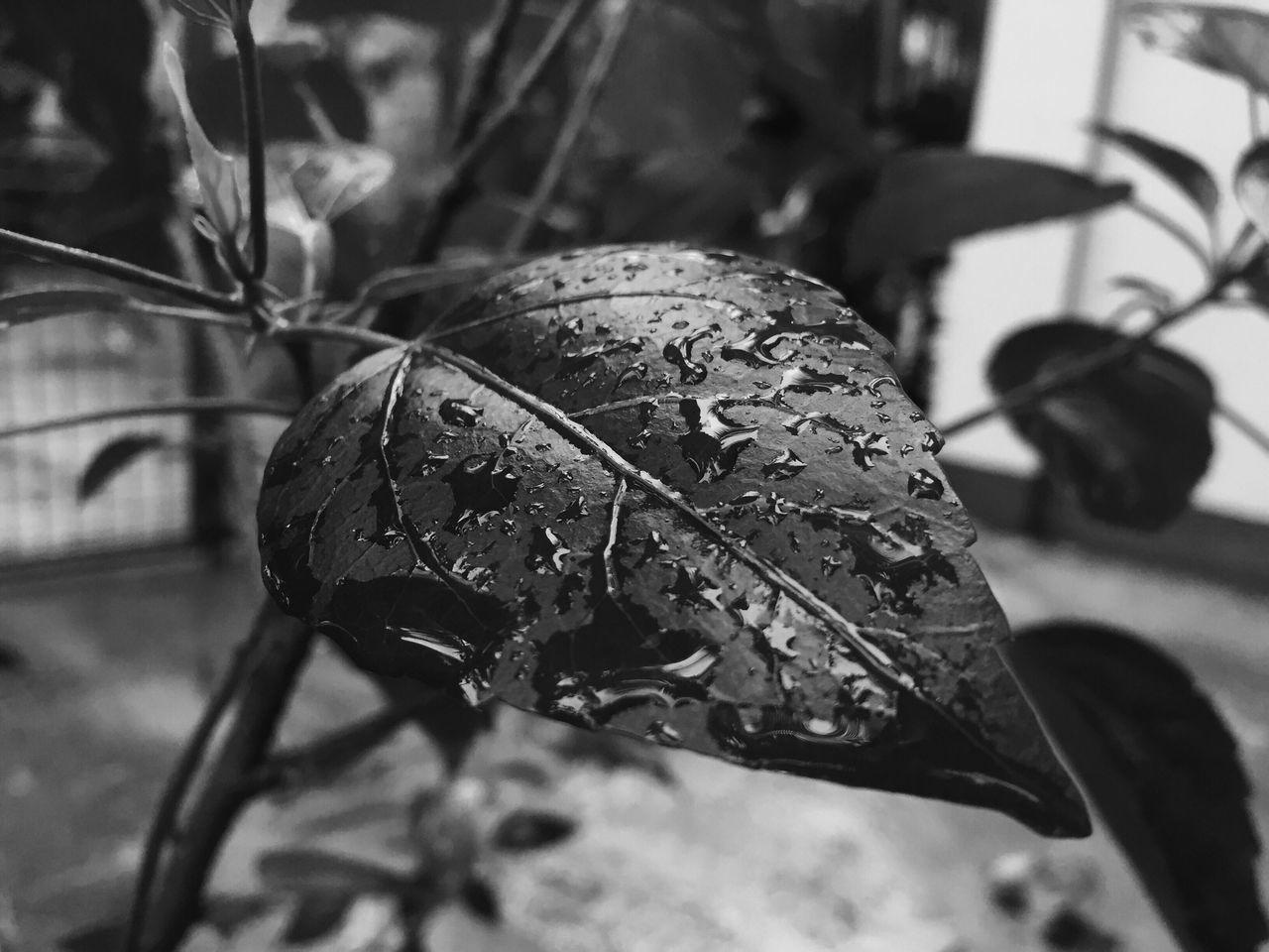 Wet leaves Leaves Wetleaves Rainyseason