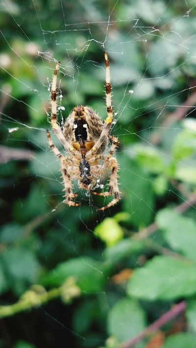 Spider Web Spider Animal Themes One Animal Animals In The Wild Insect Close-up Focus On Foreground Fragility Day Outdoors Beauty In Nature Autumn EyeEm Gallery EyeEm Best Shots EyeEm Nature Lover Nature Catching A Moment On Camera