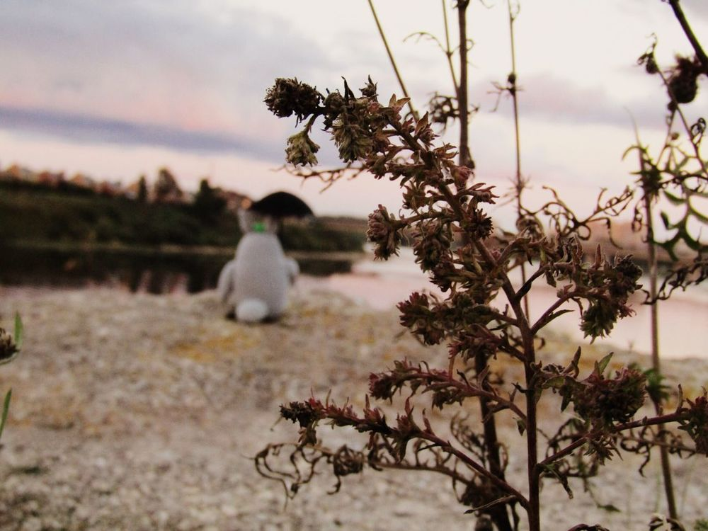 My little wizard Totoro decided to visit Pskov! Beauty In Nature Nature Sky No People Flower Day Wizard Wizard World Pskov Totoro Outdoors Dreaming Magic Moments EyeEm Nature Lover EyeEmNewHere EyeEmNewHere