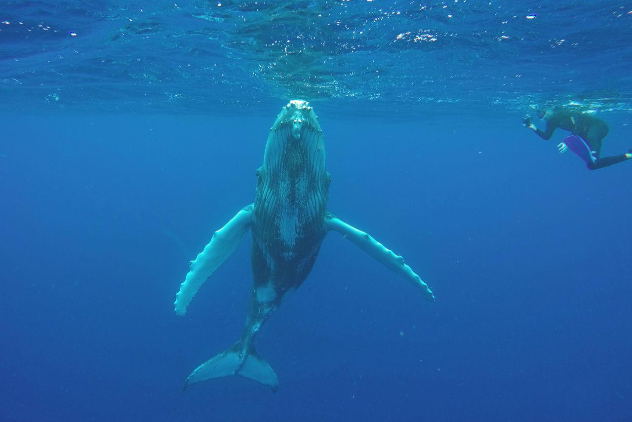 Beautiful stock photos of underwater, Adventure, Animal Themes, Animal Wildlife, Animals In The Wild