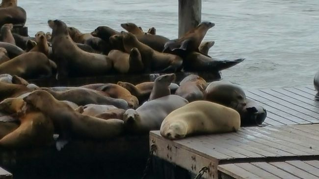 Up Close Street Photography Seals On The Dock Nap Time Telling Stories Differently Migration Story Of Seals Persecuted Then Welcomed Check It Out Pier 39 Marina Cuteness Enjoying Life Atmospheric Mood Outdoor Photography Street View Nature_collection My Favorite Photo The Street Photographer - 2016 EyeEm Awards