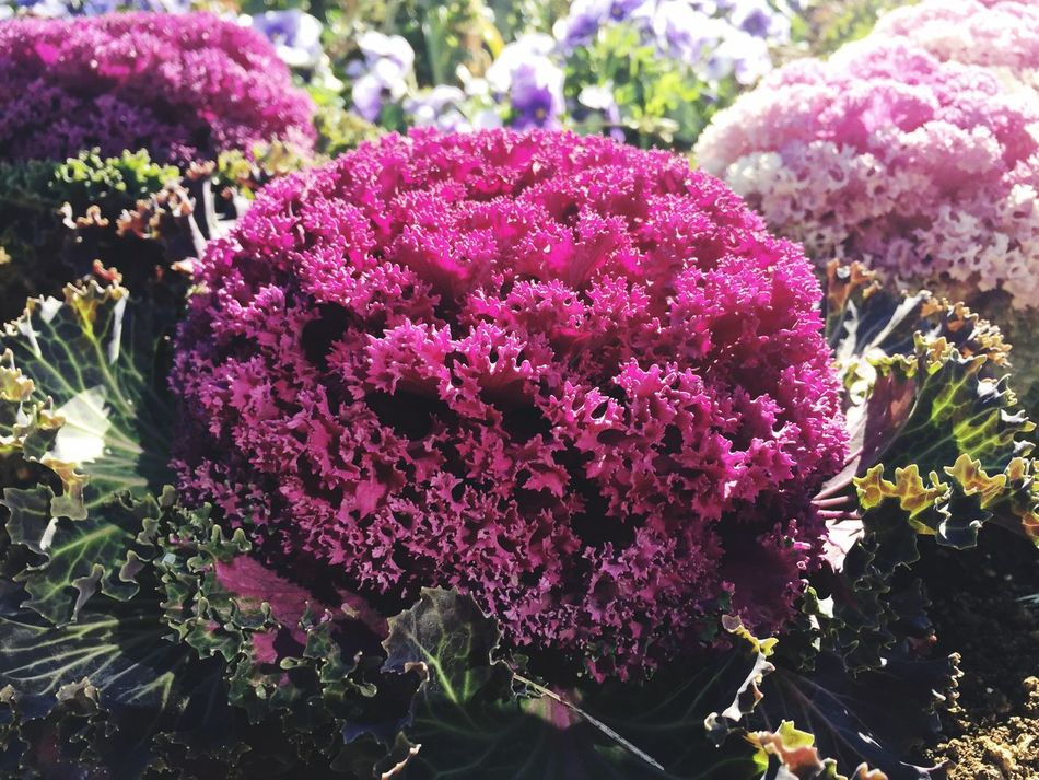 Spring Blossoms Flower Growth Nature Beauty In Nature Plant Freshness Pink Color Fragility No People Flower Head Outdoors Day Close-up