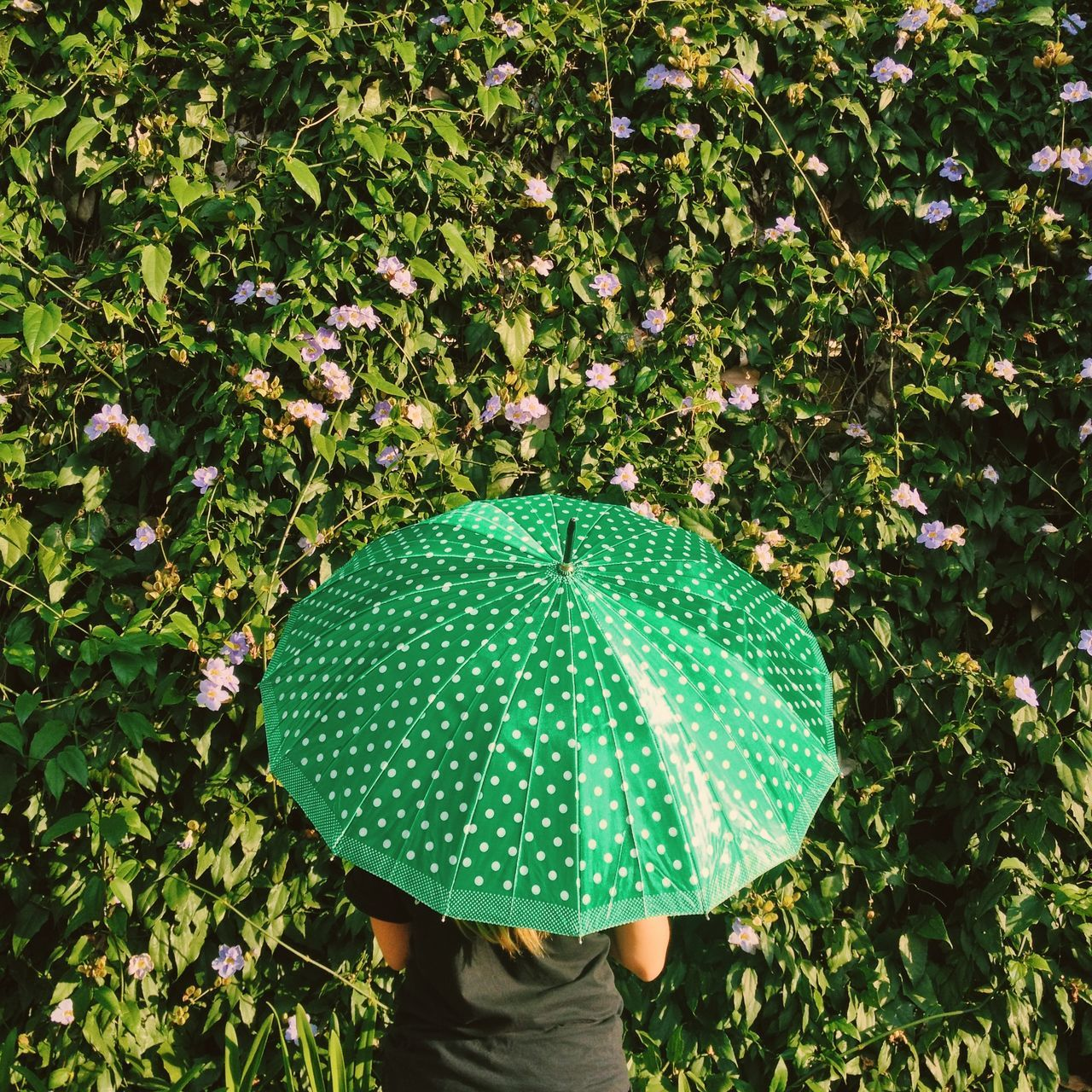 Green Umbrella Green Wall Adapted To The City Adult Adults Only Beauty In Nature Creative Day Green Color Growth Low Section Nature One Person One Woman Only Outdoors People Protection Real People Standing Tranquility Tree Umbrella