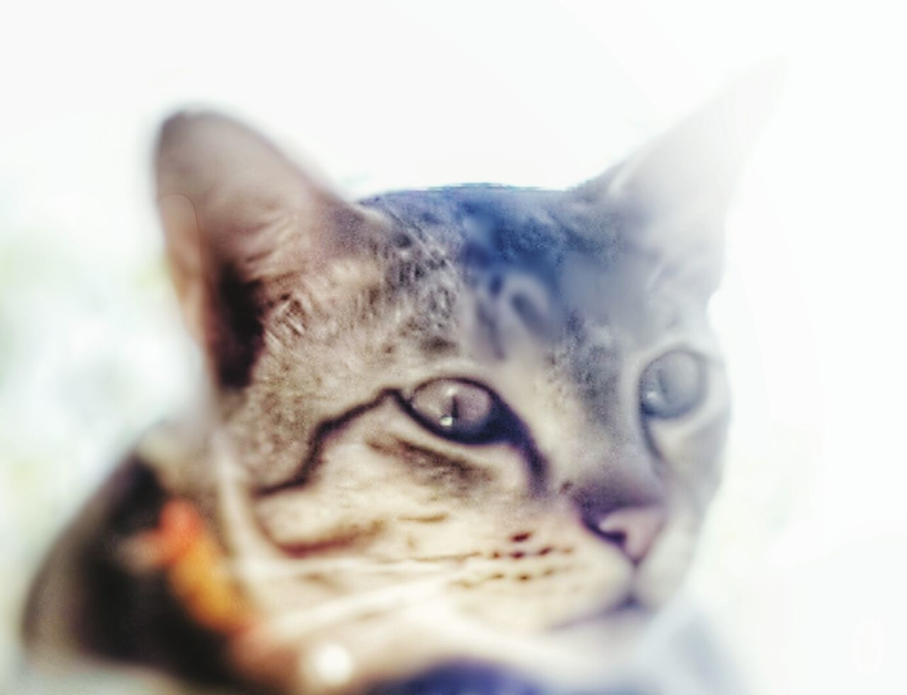 Cat♡ Domestic Cat Close-up Simply Beautiful Enjoying The Sights Wow I Like So From Where I Stand Classic Elegance