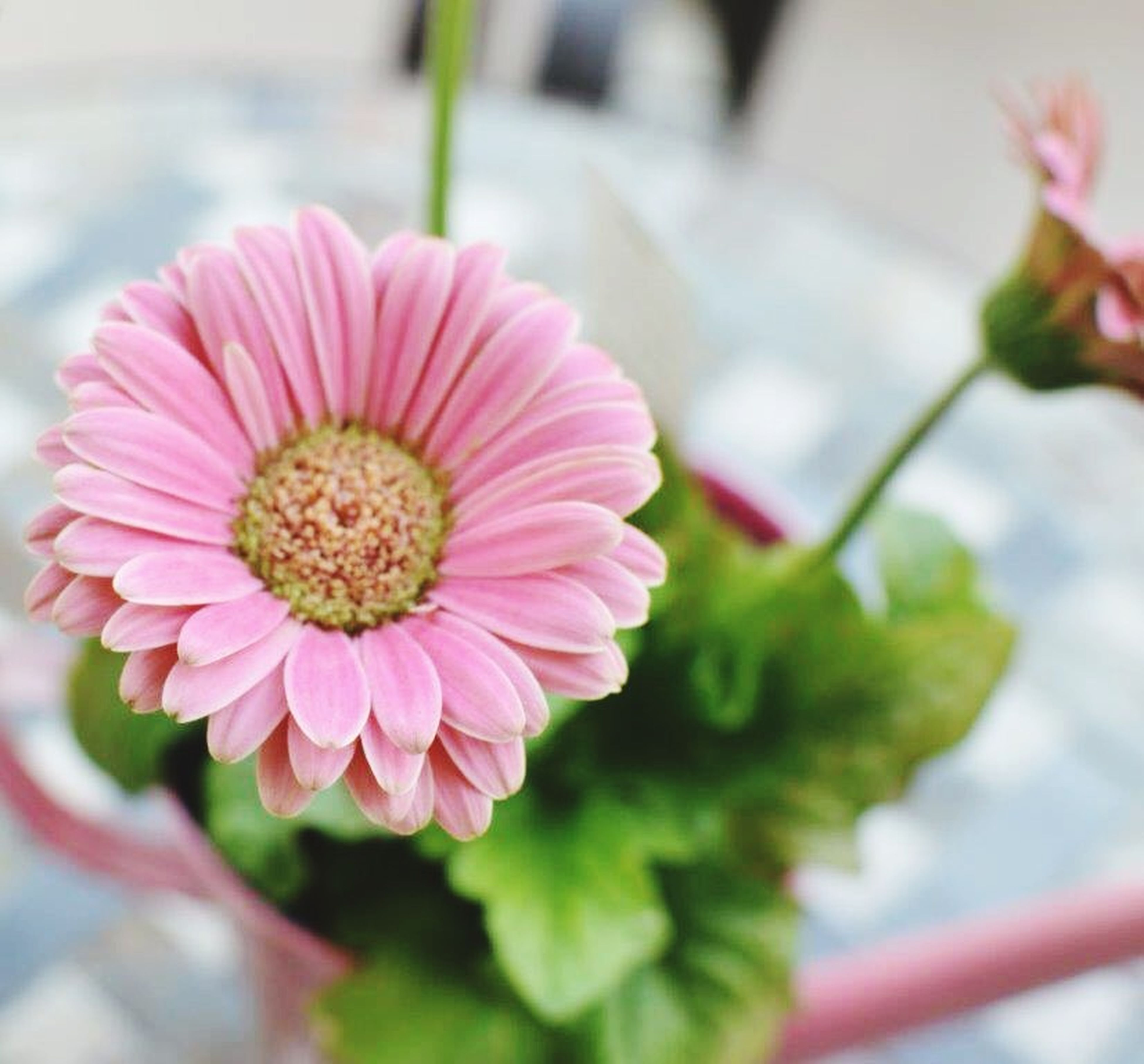 flower, petal, freshness, fragility, flower head, close-up, focus on foreground, beauty in nature, growth, pink color, blooming, nature, plant, pollen, in bloom, blossom, indoors, selective focus, single flower, day