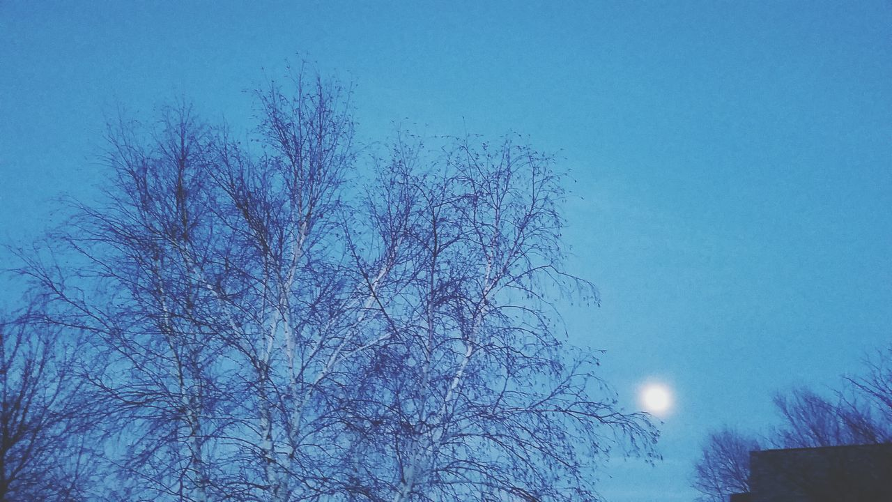 No People Nature Close-up Blue Tree Sky Low Angle View Clear Sky Outdoors Branch Day Beauty In Nature full moon