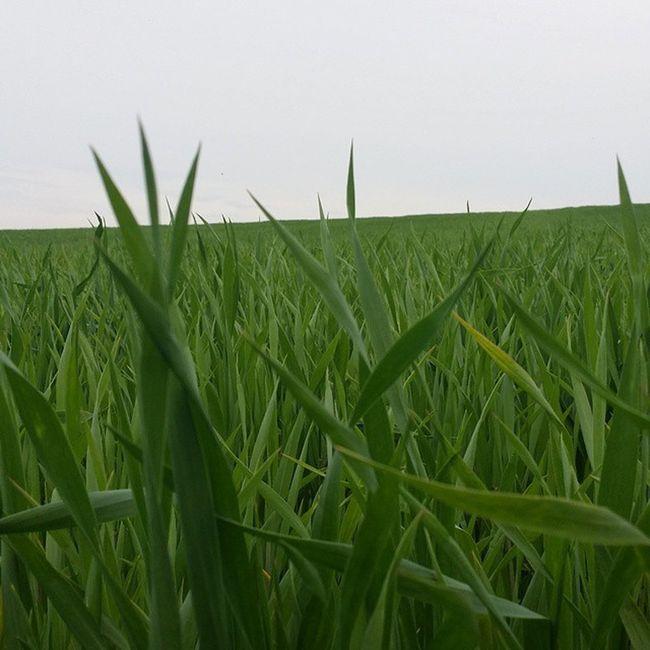 Grass Trawa Dobrawiemtonjetrawa Pole Farma Ognisko Zielen Nature Natura Polska Poland Sky Pseudo