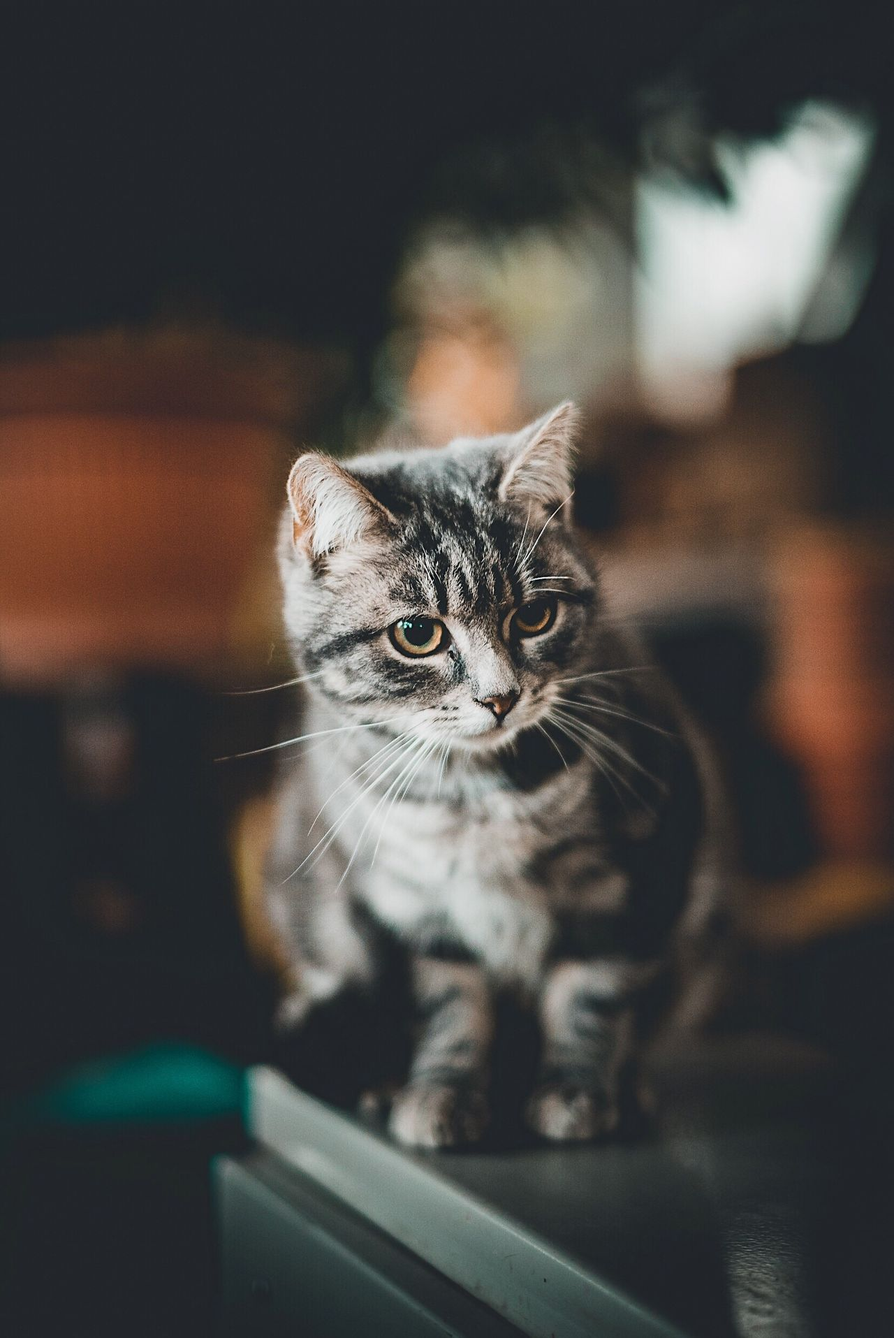 Beautiful stock photos of animals,  Animal Themes,  Beauty In Nature,  Cat,  Close-Up