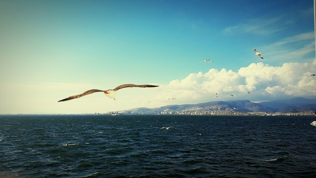 Seagulls In Flight Seagulls And Sea Sea And Clouds Sea Gulls And Sky Gulls And Sea Gulls In Flight Seatrip EyeEm Best Shots Izmir Turkey Seagulls Sea And Sky Clouds And Sky EyeEm City Shots Ship Vapur İzmir/Karşıyaka