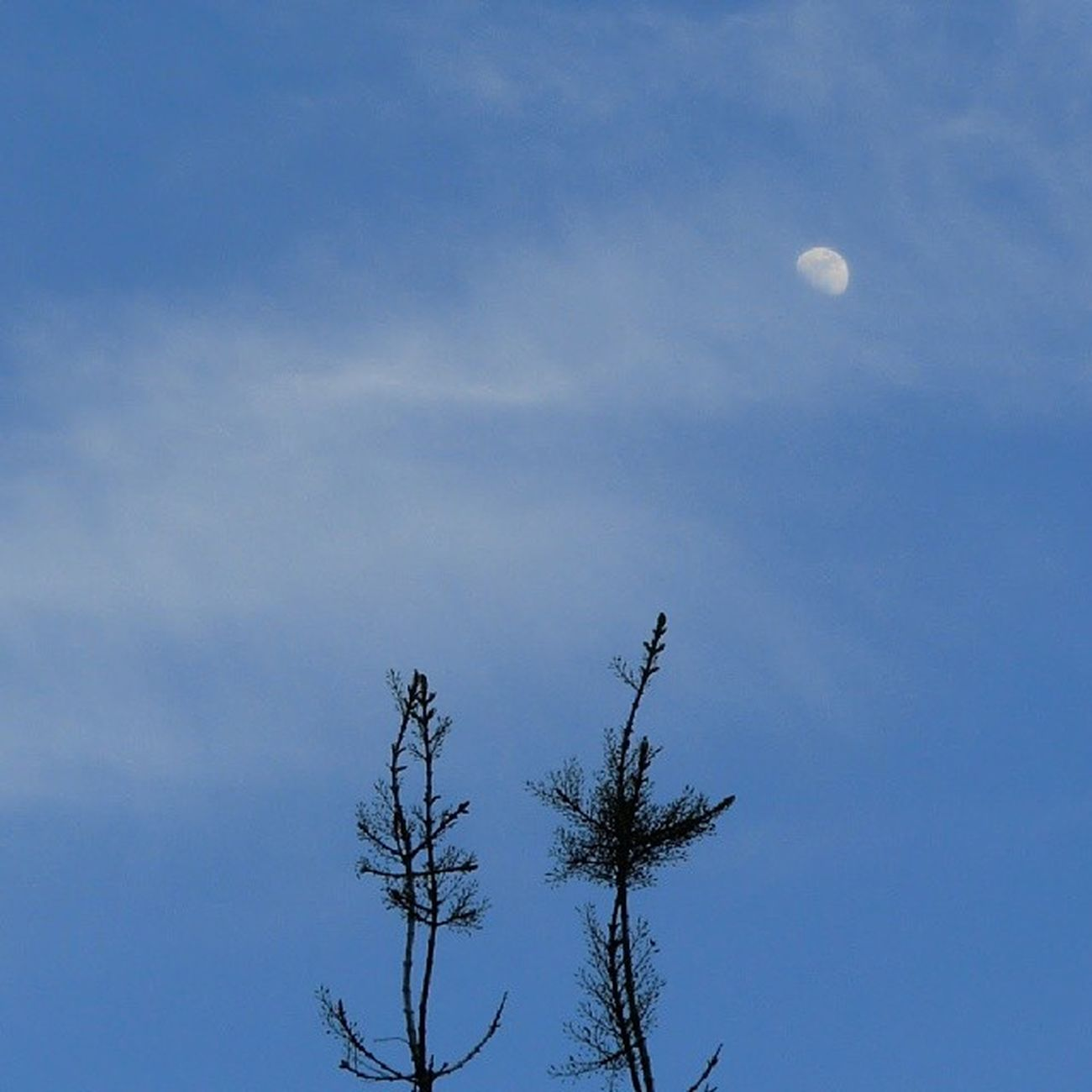 Lunalunera Skylovers Moon Zaragoza igerszgz igersaragon nubesdehoy