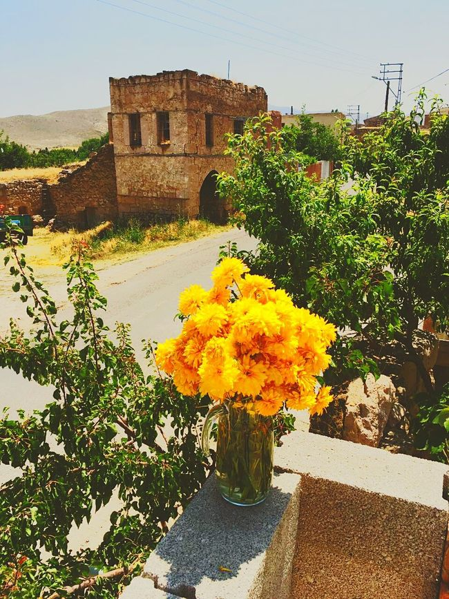 Portrait.. Green Green Green!  Niğde Nature Beauty EyeEm Best Shots Nature Lover Flowers, Nature And Beauty Nature Photography Relaxation Colourful EyeEm Gallery Flowers,Plants & Garden Hi! Everybody Hello World Good Times World Eyeem Market Turkey Relaxing EyeEm Team Taking Photos Summer 2016 Nopeople Colour Of Life Eyeem Turkey Iloveit