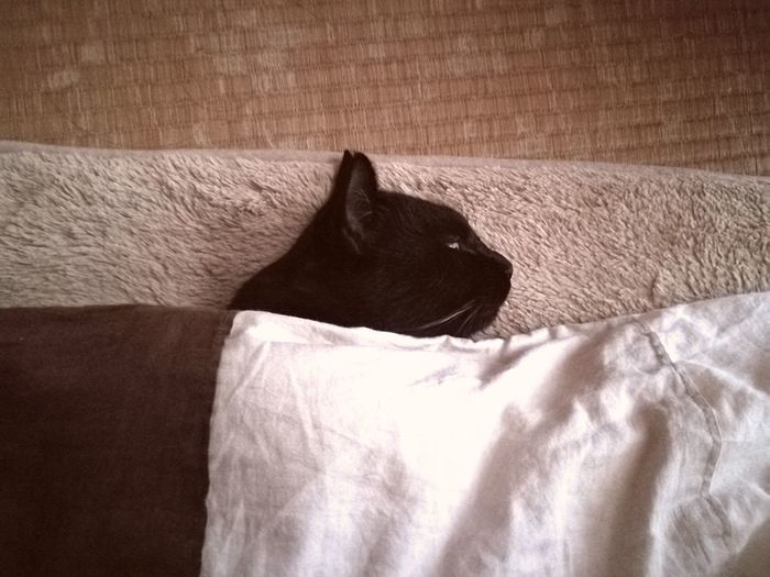 Black Cat Sleeping Tatami Huton Domestic Cat Cat Cute Love Cat Relaxation No People One Animal Brown Indoors  Day Animal Themes Japan Portrait