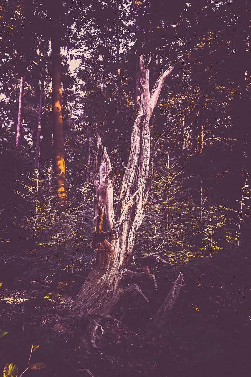 tree, tree trunk, forest, no people, outdoors, nature, night, growth, branch, beauty in nature