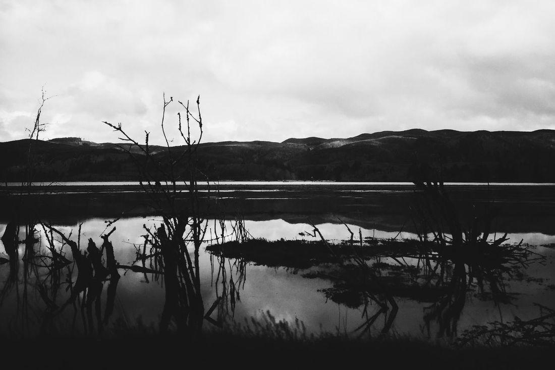 Black & White Landscape Rivers Willapa River in Pacific County, WA