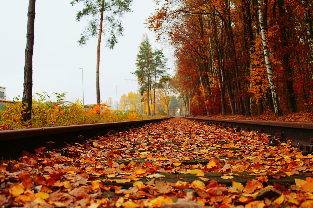 Autumn Colors Colors Of Autumn Autumn Train Tracks Leading The Way Forward The Great Outdoors - 2015 EyeEm Awards Railway My Best Photo 2015 The Adventurer - 2015 EyeEm Awards Adventures Beyond The Ultraworld The Adventure Handbook AMPt - LOVE Taking Photos Taking Pictures Wallpaper Macro Beauty Photographic Memory Pattern Pieces Learn & Shoot: After Dark Pastel Power White Wall