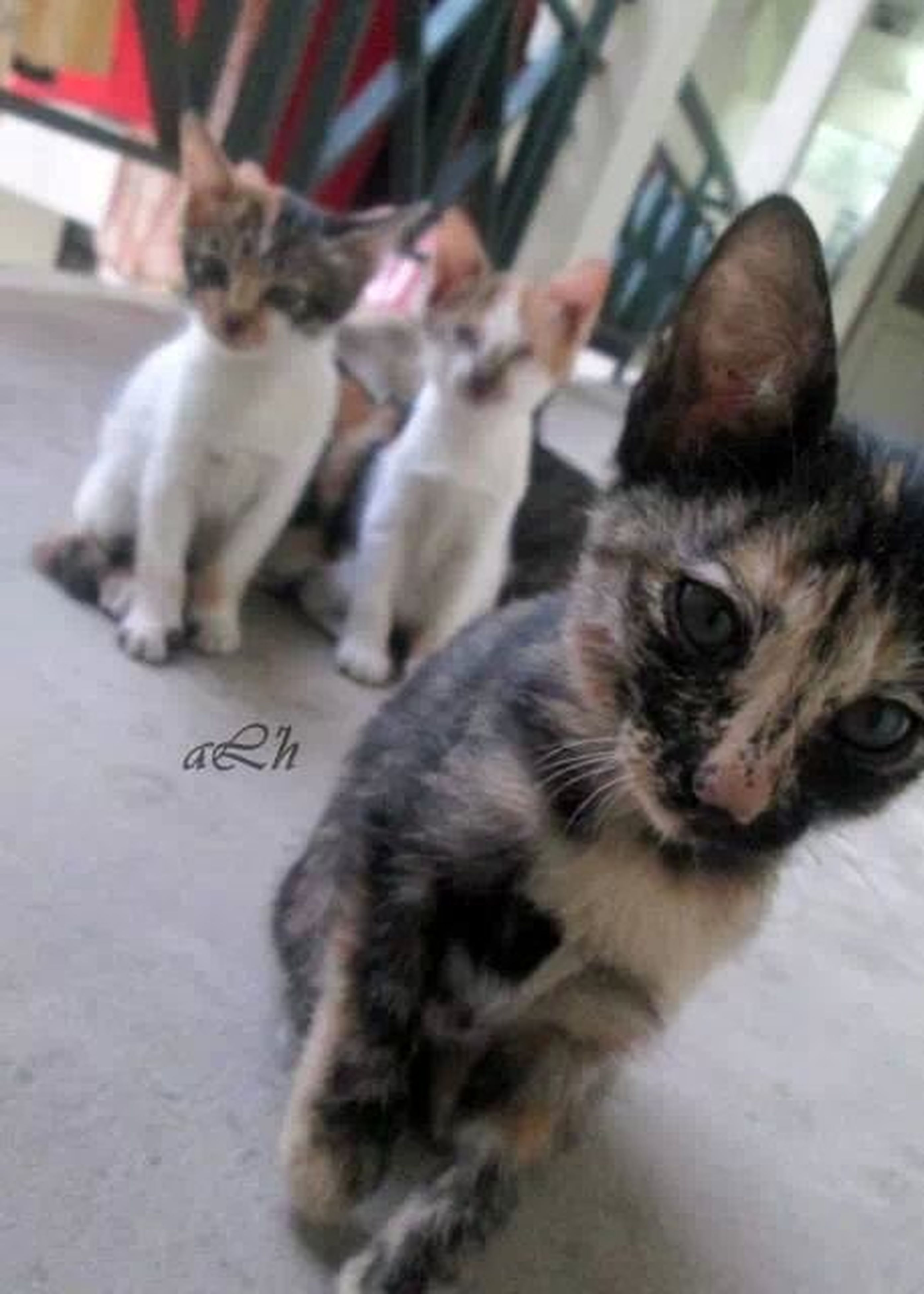 animal themes, domestic animals, pets, mammal, one animal, domestic cat, cat, two animals, indoors, feline, focus on foreground, young animal, togetherness, whisker, incidental people, kitten, close-up, street, portrait, looking at camera