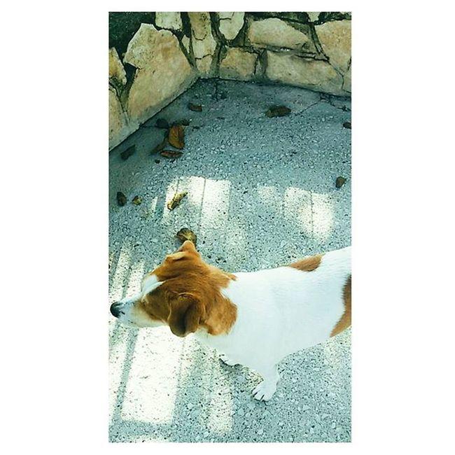 La parte più figa di Me 🐶🐕😍 Dog Doglover Doglovers Dogs Mydog Mylifestyle Mylife Autumnlife Autumn Nature Naturelovers Cute Likeforlike Like4like Follow4follow Followme Followforfollow