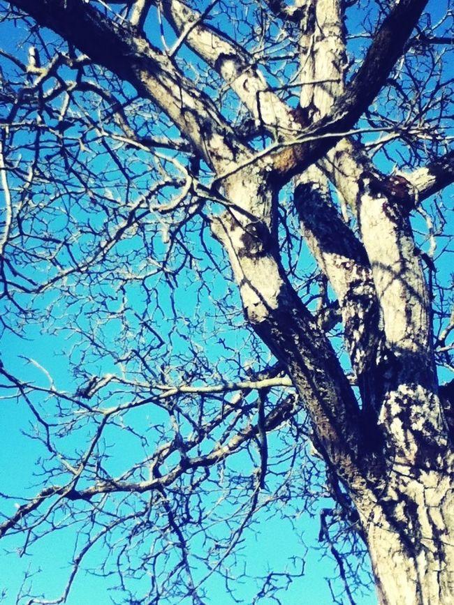 Taking Photos Tree Bluesky Ciel Bleu