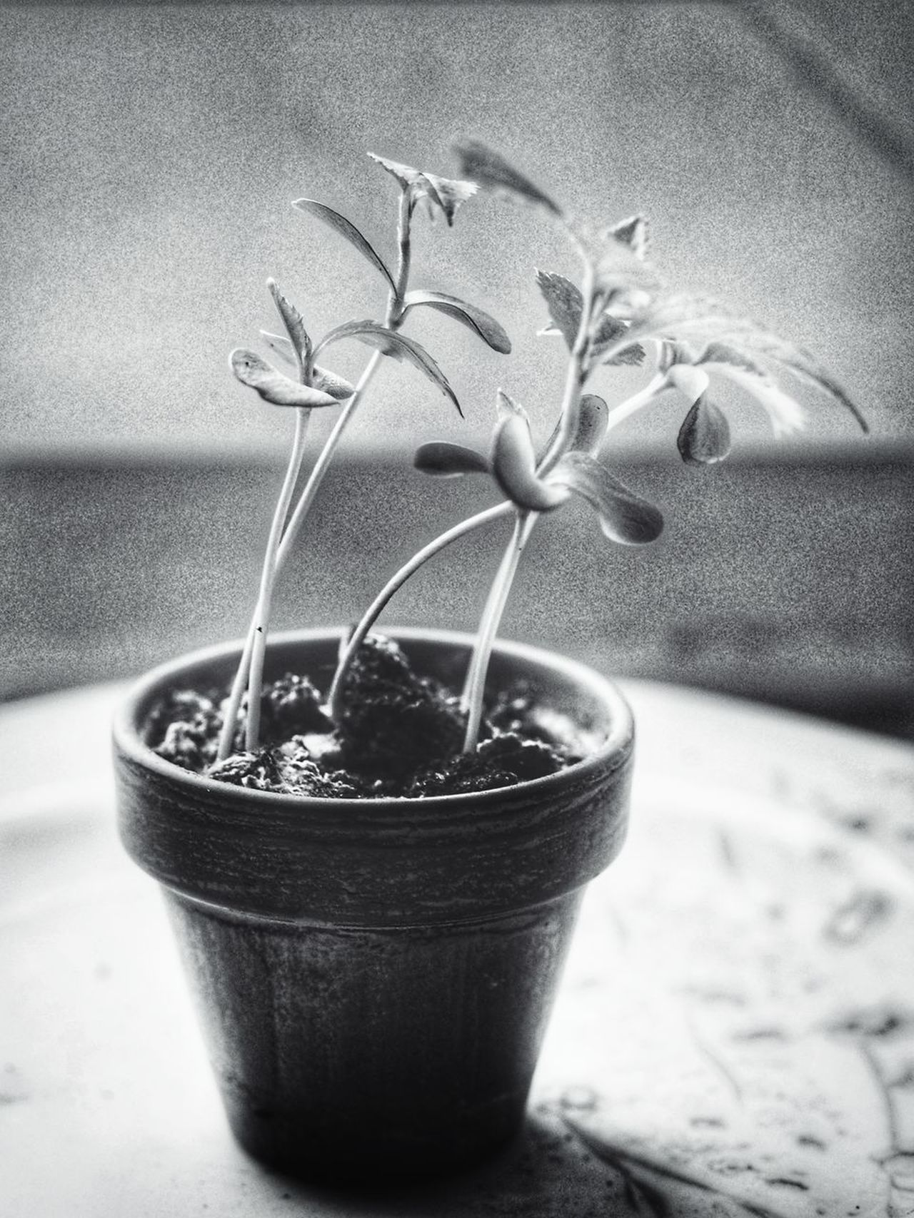 My little love - MAinLoveWithCreation MAinLoveWithFreedom MAinLoveWithMemories MAinLoveWithYou and Little Love in Little Pot Garden Pot Little Tree Apple Tree Growing Growing Up Growing Stronger Growth Monochrome Mono Monochromatic Monochrome Photography Black And White Bnw Bnw_collection Bnw_captures Bnw_life New Life How I See The World VanessArt - 19.03.2017 - #BadLippspringe Long Goodbye