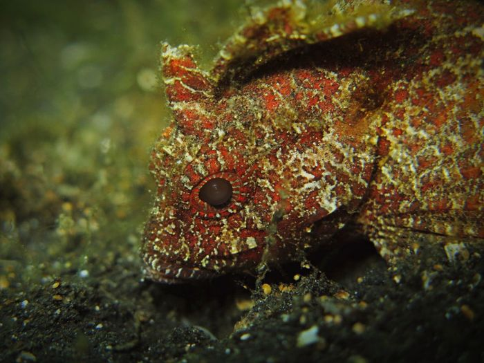 Fish Scuba Diving Underwater Photography INDONESIA Nature Holiday