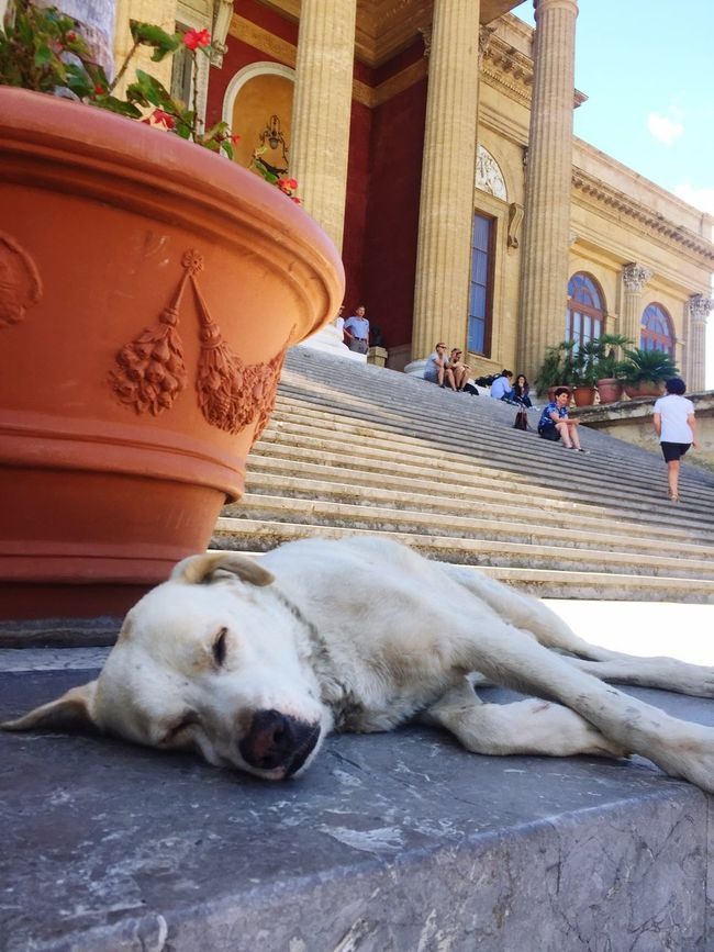 Canis et Circenses Dog Pets Mammal Domestic Animals One Animal Animal Themes Day Outdoors Lying Down Architecture No People